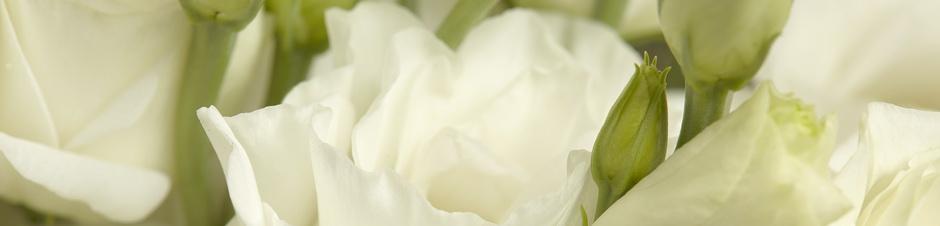 IFD_Flower_Trends_BlackTieBarefoot_RosaFlora_ABCWhiteLisianthus1